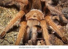 araignée source google